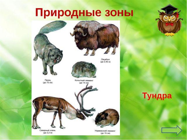 Тундра Природные зоны Ekaterina050466