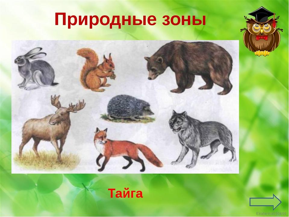 Природные зоны Тайга Ekaterina050466