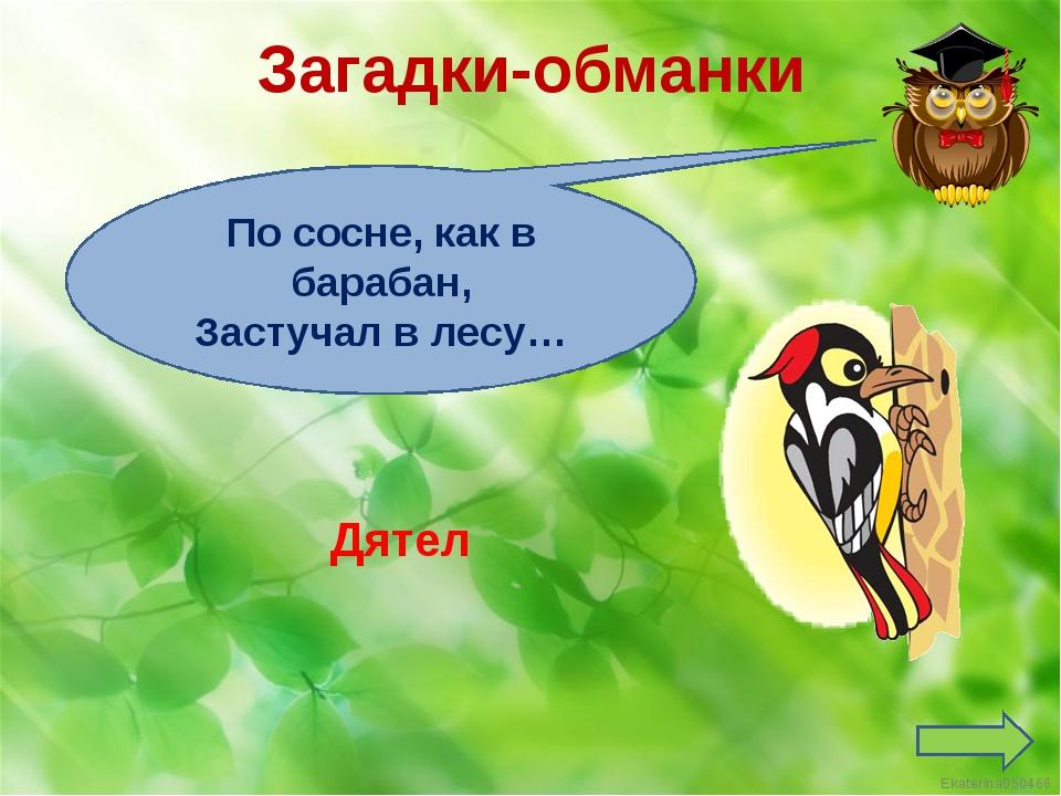 Загадки-обманки По сосне, как в барабан, Застучал в лесу… Дятел Ekaterina050466