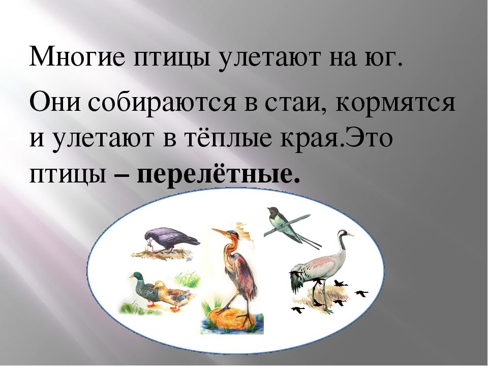 изложение птицы собираются в стаи 4 класс образом, термобелье