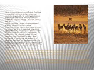 Фауна пустынь довольно однообразна. Богат мир пресмыкающихся (гекконы, сцинки