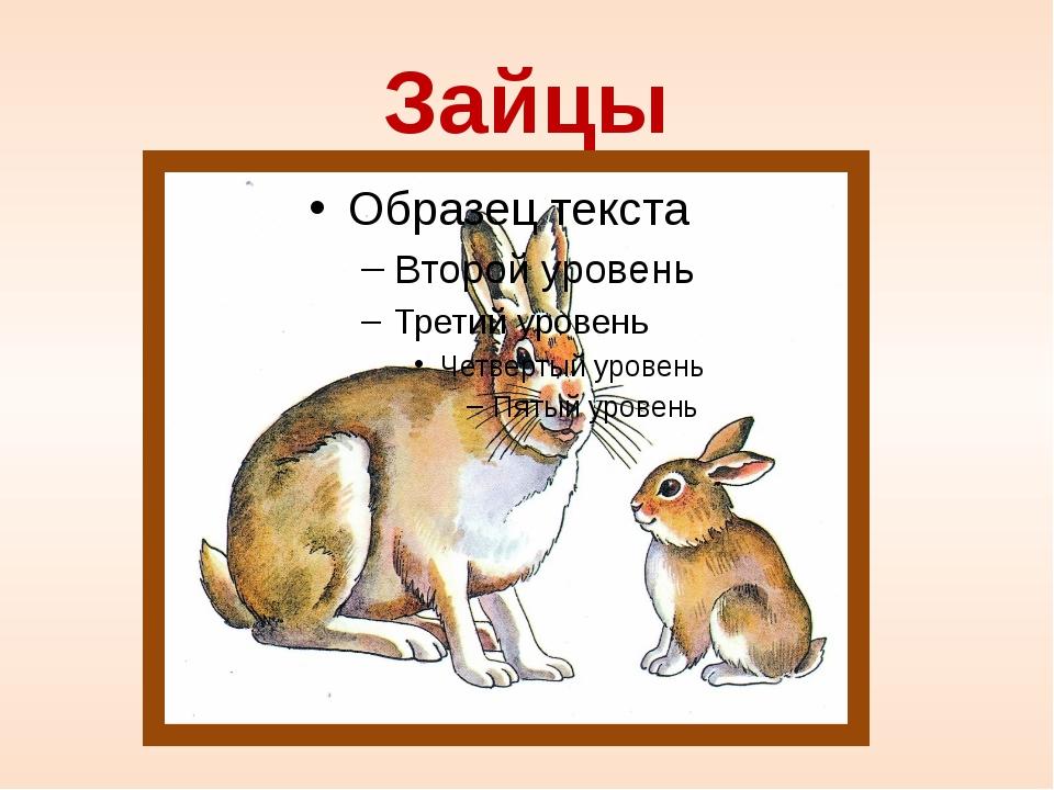 Зайцы