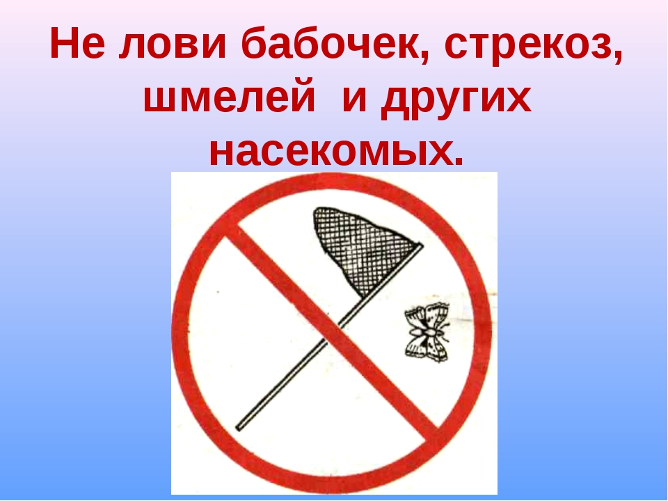 знак не ловить насекомых картинка тротуарная