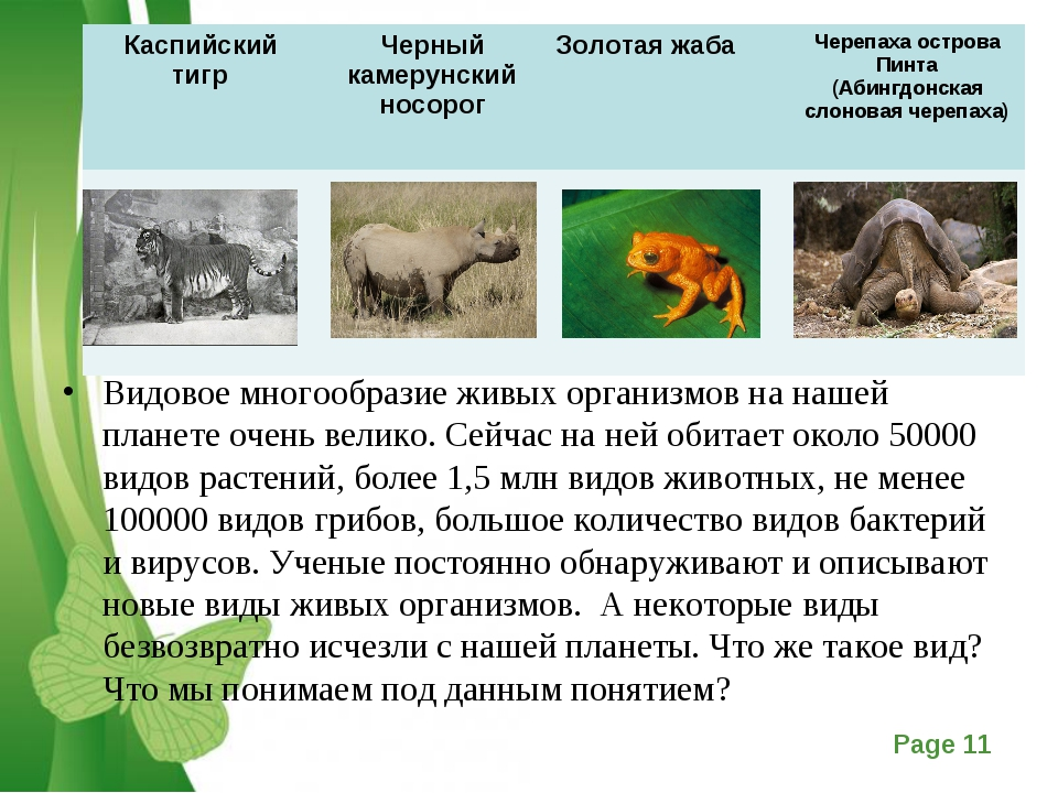 Видовое многообразие живых организмов на нашей планете очень велико. Сейчас н...