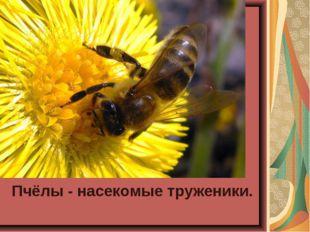Пчёлы - насекомые труженики.