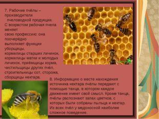 7. Рабочие пчёлы – производители пчеловодной продукции. С возрастом рабочая