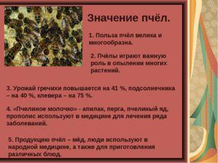 Значение пчёл. 1. Польза пчёл велика и многообразна. 4. «Пчелиное молочко» -