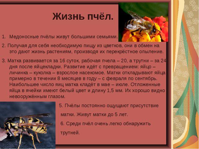 Жизнь пчёл. Медоносные пчёлы живут большими семьями. 2. Получая для себя необ...