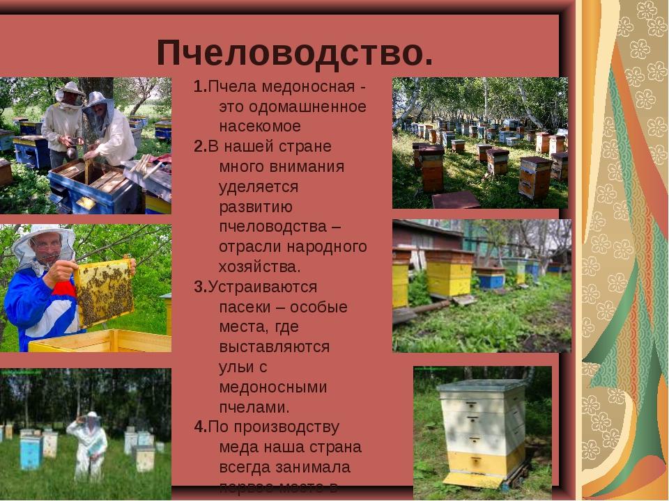Пчеловодство. 1.Пчела медоносная - это одомашненное насекомое 2.В нашей стран...