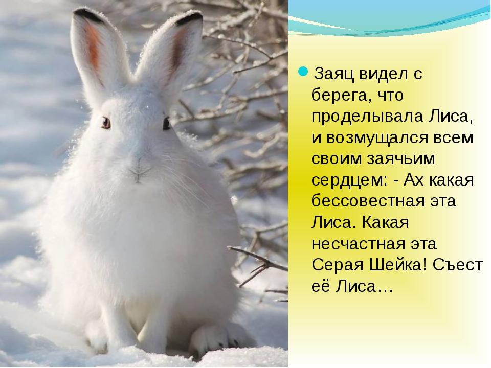 Заяц видел с берега, что проделывала Лиса, и возмущался всем своим заячьим с...