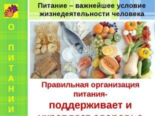 Питание – важнейшее условие жизнедеятельности человека Правильная организация