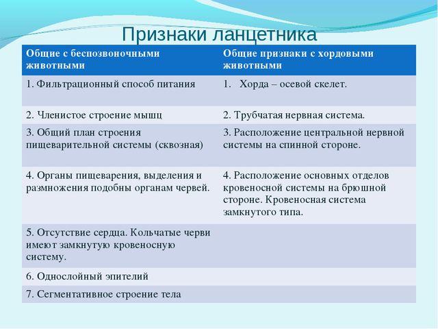 Признаки ланцетника Общие с беспозвоночными животнымиОбщие признаки с хордов...
