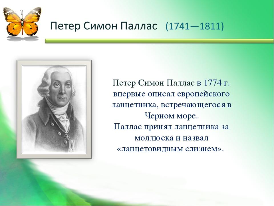 Петер Симон Паллас в 1774 г. впервые описал европейского ланцетника, встречаю...