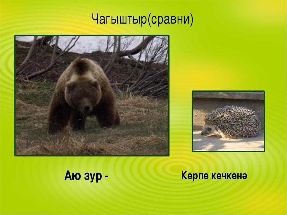 Чагыштыр(сравни) Аю зур - Керпе кечкенә