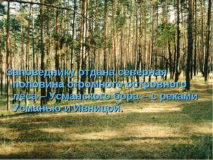 Заповеднику отдана северная половина огромного островного леса – Усманского б