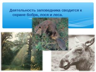 Деятельность заповедника сводится к охране бобра, лося и леса.