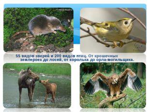 55 видов зверей и 200 видов птиц. От крошечных землероек до лосей, от корольк