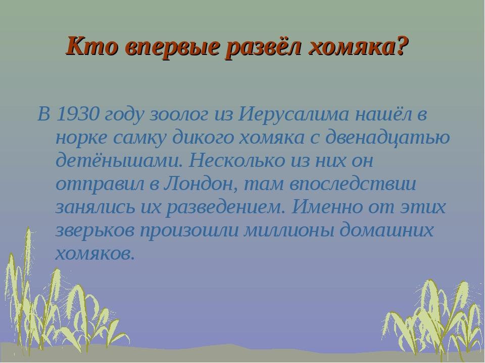 Кто впервые развёл хомяка? В 1930 году зоолог из Иерусалима нашёл в норке сам...