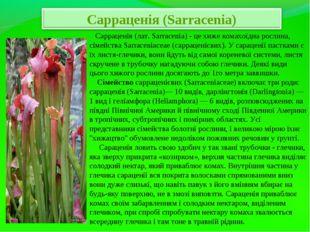 Сарраценія (лат. Sarracenia) - це хиже комахоїдна рослина, сімейства Sarrace
