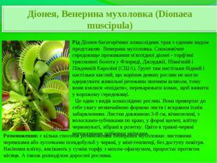 РідДіонея багаторічних комахоїдних трав з єдиним видом представляє Венерина