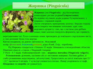 Жирянка(лат.Pinguícula) - рід багаторічних комахоїдних рослин родиниПузирчат