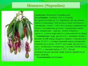 Сімейство: Непентові (Nepenthaceae). Батьківщина: тропічна Азія та Океанія. Ц