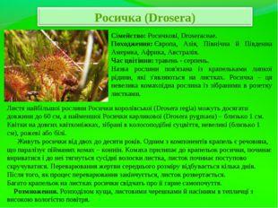 Сімейство:Росичкові, Droseraceae. Походження:Європа, Азія, Північна й Півд