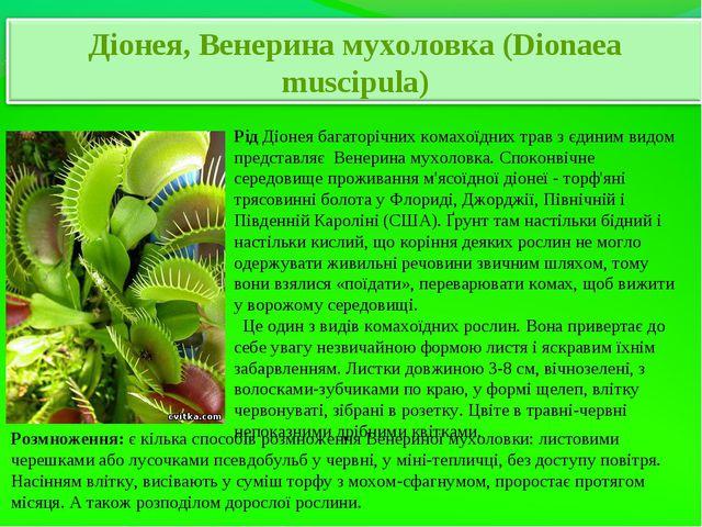РідДіонея багаторічних комахоїдних трав з єдиним видом представляє Венерина...