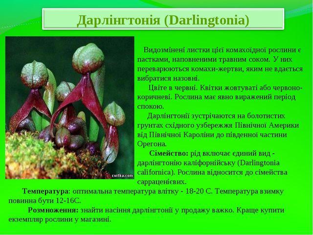 Видозмінені листки цієї комахоїдної рослини є пастками, наповненими травним...