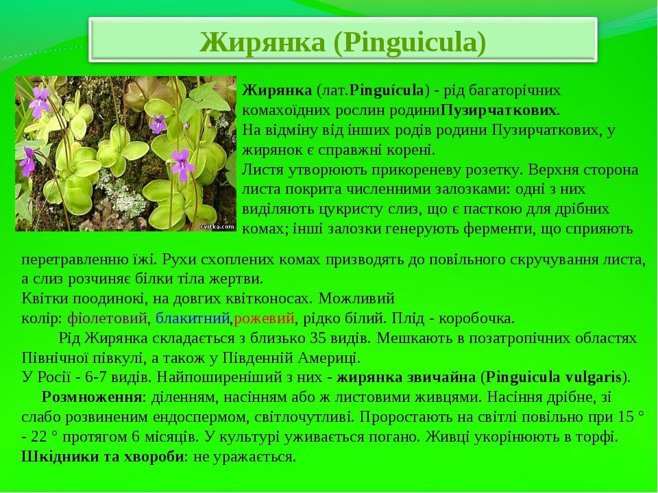 Жирянка(лат.Pinguícula) - рід багаторічних комахоїдних рослин родиниПузирчат...