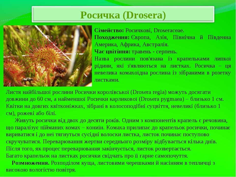 Сімейство:Росичкові, Droseraceae. Походження:Європа, Азія, Північна й Півд...