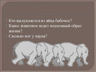Кто вылупляется из яйца бабочек? Какое животное ведет подземный образ жизни?