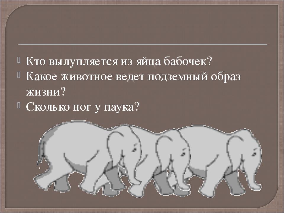 Кто вылупляется из яйца бабочек? Какое животное ведет подземный образ жизни?...
