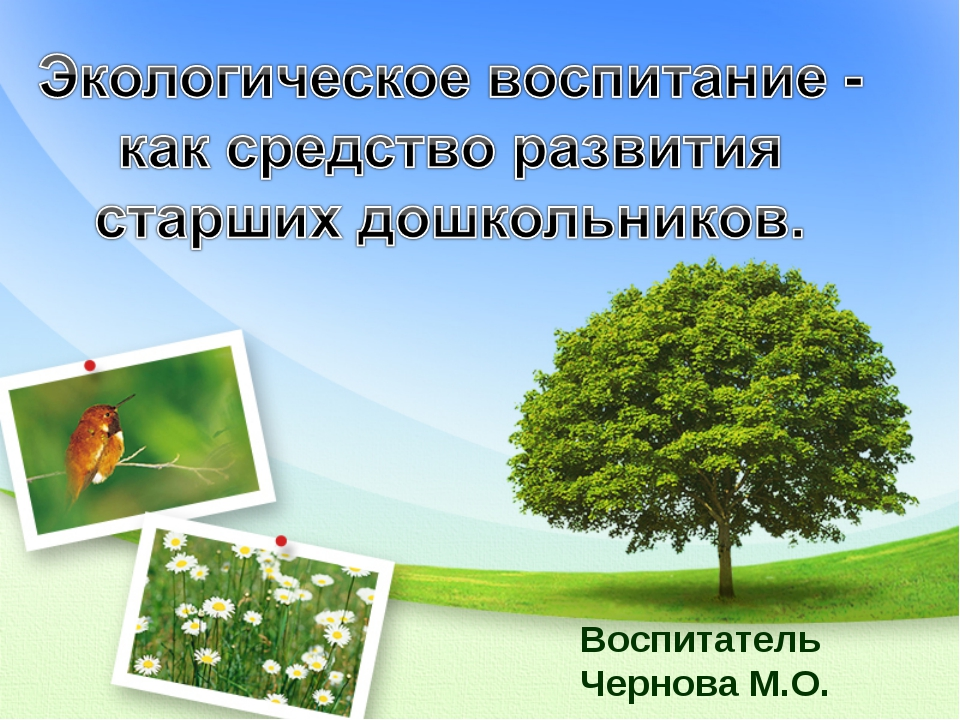 Воспитатель Чернова М.О.