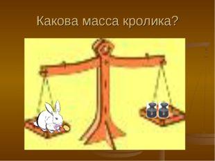 Какова масса кролика?