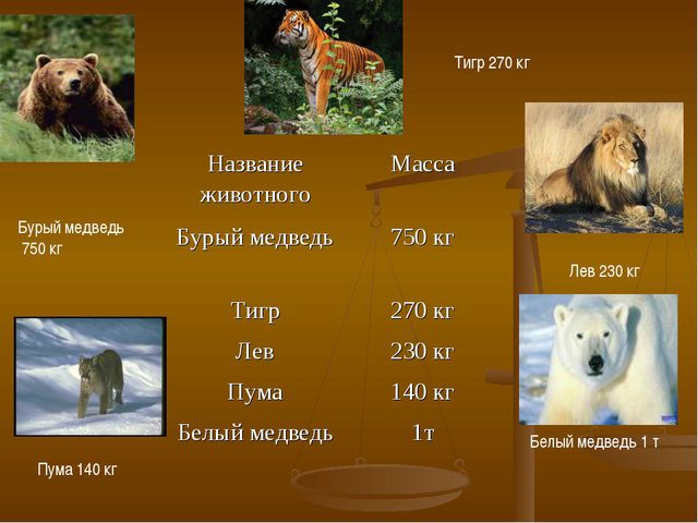 Бурый медведь 750 кг Пума 140 кг Тигр 270 кг Лев 230 кг Белый медведь 1 т