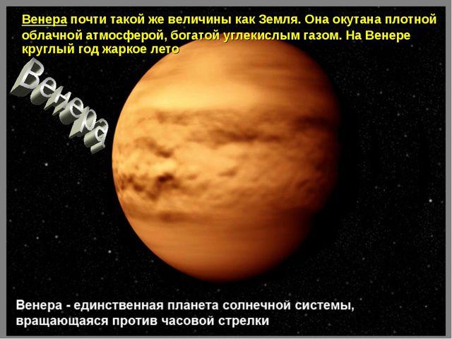 Венера почти такой же величины как Земля. Она окутана плотной облачной атмос...