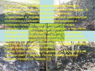 В огне сгорают семена однолетних растений и выживают только некоторые многоле