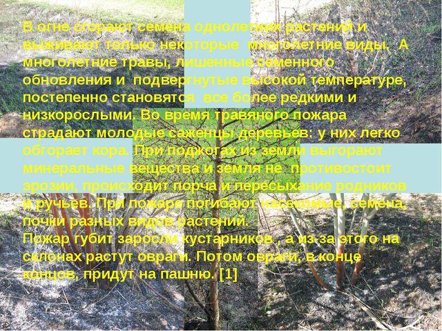 В огне сгорают семена однолетних растений и выживают только некоторые многоле...