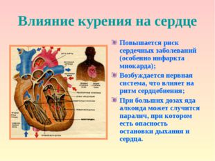 Влияние курения на сердце Повышается риск сердечных заболеваний (особенно инф