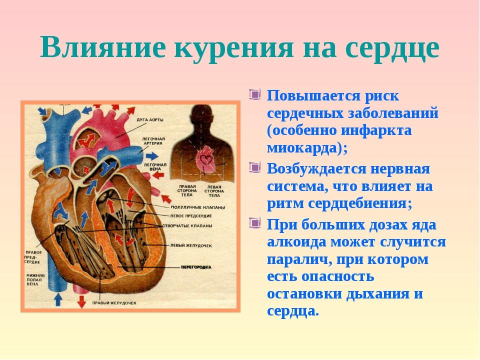 Влияние курения на сердце Повышается риск сердечных заболеваний (особенно инф...