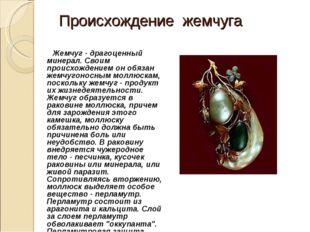 Происхождение жемчуга Жемчуг - драгоценный минерал. Своим происхождением он