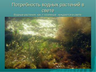 Потребность водных растений в свете Водные растения, как и наземные, нуждаютс