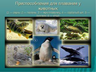 Приспособления для плавания у животных (1 — окунь; 2 — тюлень; 3 — жук-плавун