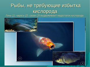 Рыбы, не требующие избытка кислорода Линь (1), карась (2), сазан (3) выдержи