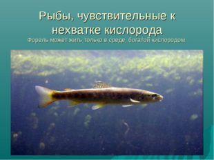 Рыбы, чувствительные к нехватке кислорода Форель может жить только в среде, б