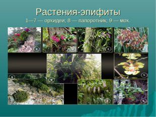 Растения-эпифиты 1—7 — орхидеи; 8 — папоротник; 9 — мох.