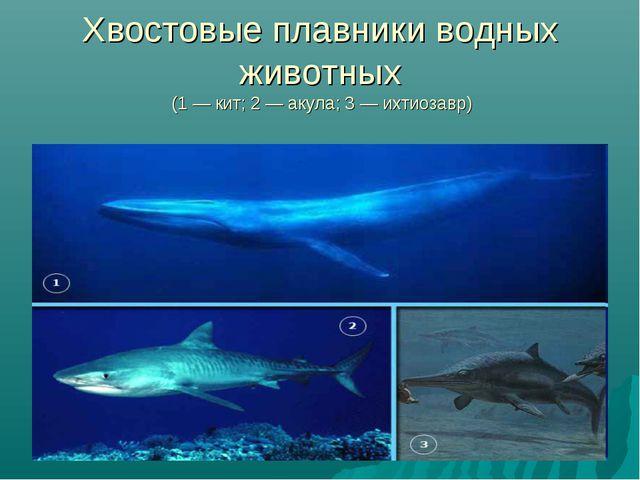 Хвостовые плавники водных животных (1 — кит; 2 — акула; 3 — ихтиозавр)