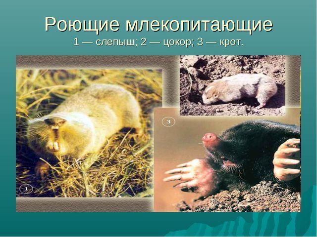 Роющие млекопитающие 1 — слепыш; 2 — цокор; 3 — крот.