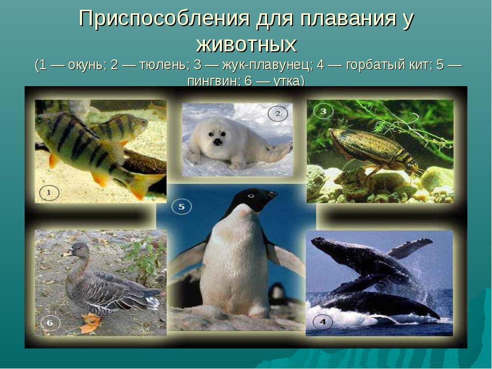 Приспособления для плавания у животных (1 — окунь; 2 — тюлень; 3 — жук-плавун...